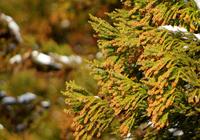 武井壮の花粉症はなぜ3日で改善したのか 花粉症の根治治療の種類とは?