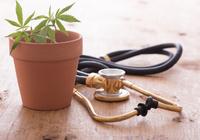 ついにわが国でも医療用大麻が抗てんかん薬となるか!?