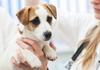 ペットの高齢化、増加する生活習慣病には東洋医学が必要な時代に!