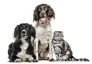 ペットが認知症は早期の発見・予防・治療が決め手!
