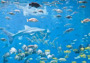 ロンブー田村、ココリコ田中も苦労体験の生態調査 魚類の生物種や絶滅危惧種には「環境DNA分析法」があるの画像1