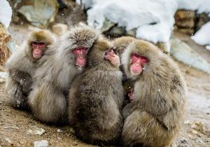 【DNA45】アカゲザルと交雑したニホンザル57頭を殺処分!生態系を守るための「外来生物法」の実態とは?の画像1