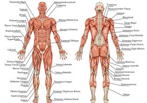 「解剖学」の基礎知識こそが実生活の中での「社会解剖学」へとつながっていくの画像1