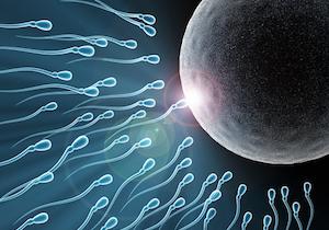 妊活するなら「年下の夫」を選べ!年下の夫を持つ妻の「出生率」は年上の夫を持つ妻よりも30%も高い!の画像1