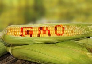 ビール業界が「遺伝子組換え」を解禁 組換え原料が使用されていない商品はコレだ! の画像1