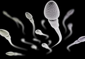 注:世界初「精液の成分研究プロジェクト」が始動!生活習慣の改善が男性の「受精力」を高めるの画像1