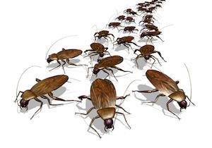 家から「ゴキブリ」を完璧に追い出す方法!自然に優しい総合的病害虫・雑草管理で「ゴキブリゼロ」にの画像1