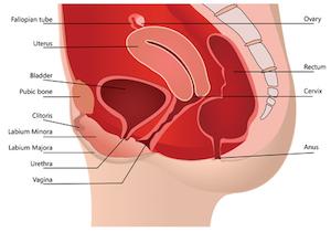 膣のゆるみ=老化のせい? 「骨盤底筋」を鍛えると<膣が若返る>の画像1