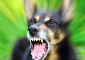 犬は「怖がっている人」に噛みつく、は本当だった! の画像1