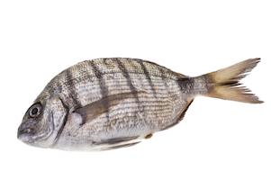 淡水魚ティラピアの皮で人の皮膚を再生 ブラジルで「火傷治療」に成功!の画像1