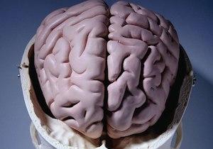 糖尿病・喫煙で「脳が石灰化」!? 海馬のもたらす認知機能の不思議の画像1