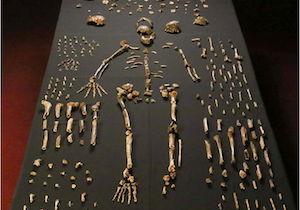 Homo_naledi_skeletal_specimens.jpg