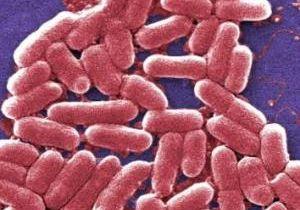 e_coli.cdc.jpg
