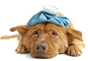 ペットの傷病ランキングTOP3 2位「外耳炎」、3位「下痢」、1位は?の画像1