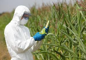 遺伝子組み換えは本当に危ない? 世界有数の遺伝子組み換え作物輸入国・消費大国日本の画像1