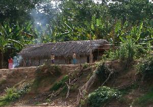 「世界一健康な心臓」をもつアマゾン・チマネ族の生活習慣の画像1