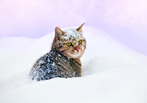 new_wintercat.jpg